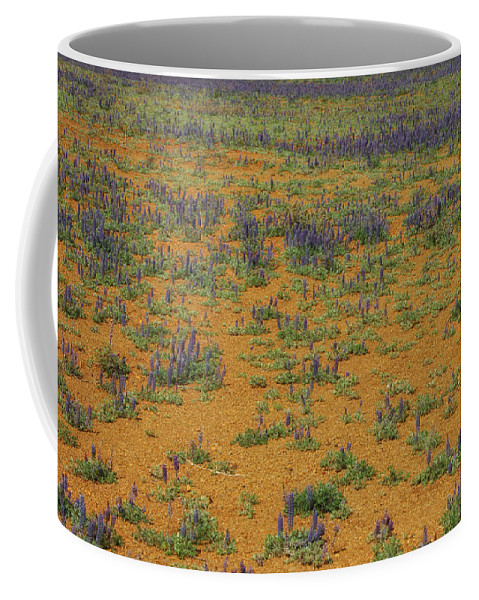 Flowers Coffee Mug featuring the photograph Infinity by Donna Blackhall