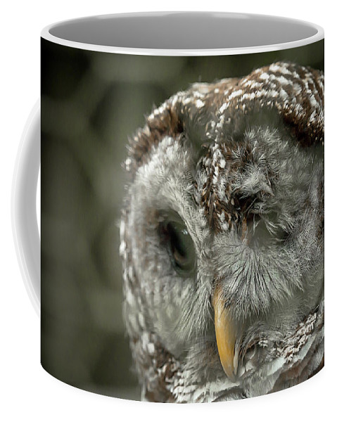Owl Coffee Mug featuring the photograph Injured Owl by Travis Rogers