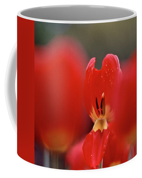 Tulip Coffee Mug featuring the photograph Inner Value by Heiko Koehrer-Wagner