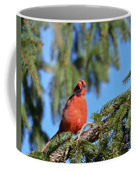 Male Cardinal Coffee Mug featuring the photograph Inquisitive Male Cardinal by Kerri Farley