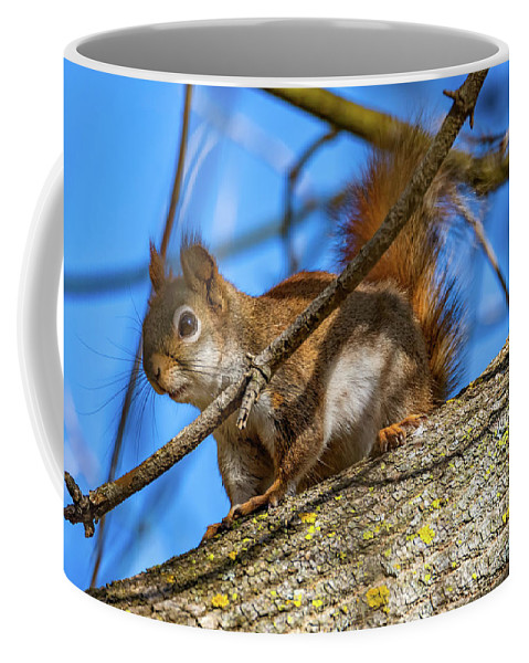 Steve Harrington Coffee Mug featuring the photograph Inquisitive Squirrel by Steve Harrington