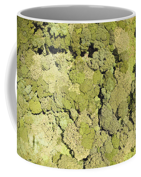 Landscape Coffee Mug featuring the photograph Inside Mount Kilimanjaro National Park by Michael Fay