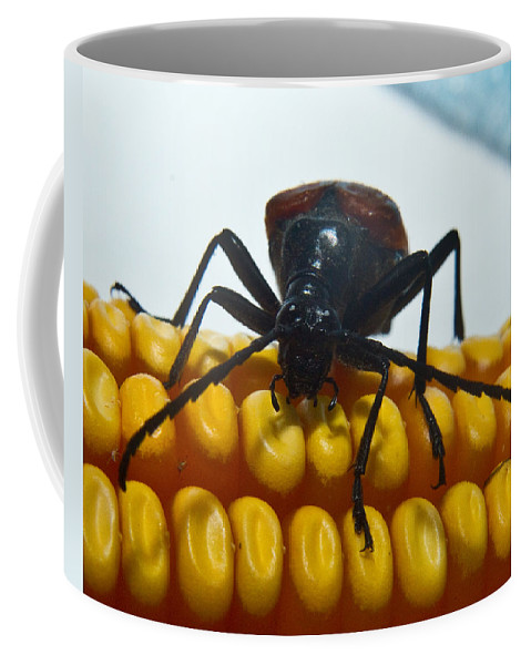 Beetle Coffee Mug featuring the photograph Inspecting Beetle by Douglas Barnett