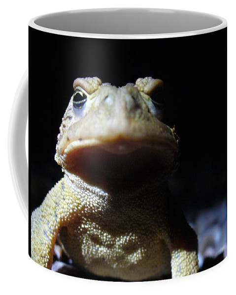 Toad Coffee Mug featuring the photograph Interrogation Of A Toad by Stefanie Beauregard