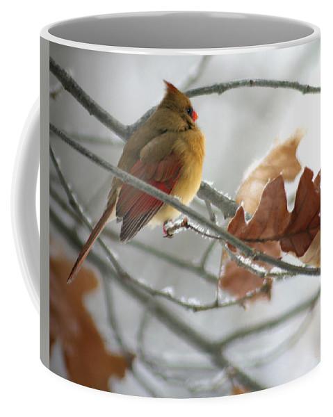 Jenny Gandert Coffee Mug featuring the photograph Into The Light by Jenny Gandert