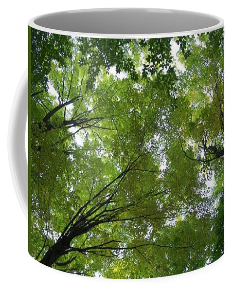 Photography Coffee Mug featuring the photograph Into The Trees by Michael TMAD Finney