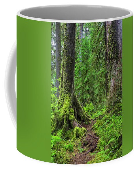 Hoh Rainforest Coffee Mug featuring the photograph Into The Woods by Stephen Stookey