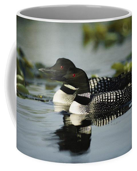 North America Coffee Mug featuring the photograph Introduction Since 1983 Inexplicably by Michael S. Quinton