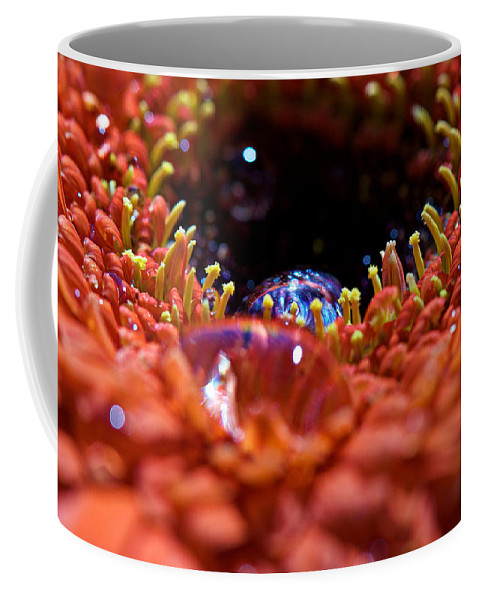 Interior Design Coffee Mug featuring the photograph Iridescent Water Drops by Lisa Knechtel