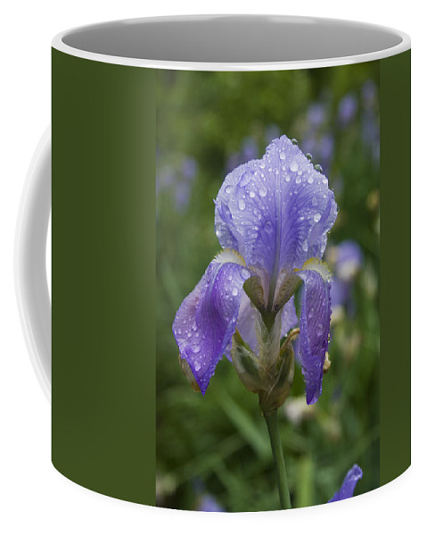 Iris Flower Blue Purple Green Rain Wet Drop Water Droplet Nature Garden Coffee Mug featuring the photograph Iris After Rain by Andrei Shliakhau