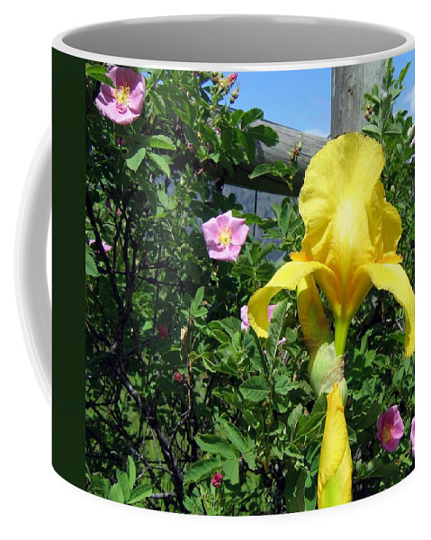 Iris Coffee Mug featuring the photograph Iris And Wild Roses by Will Borden