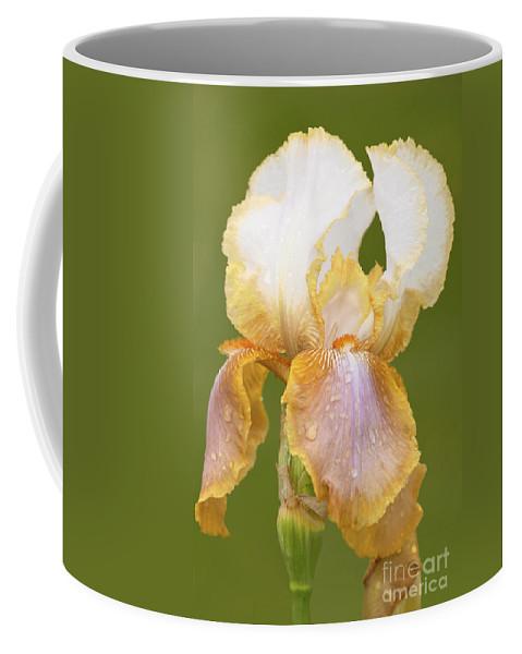 Iris Canary Frills' Coffee Mug featuring the photograph Iris Canary Frills by Regina Geoghan