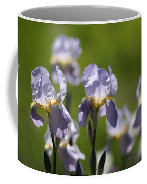 Flowers Coffee Mug featuring the photograph Iris Feild by Aliza Anderson