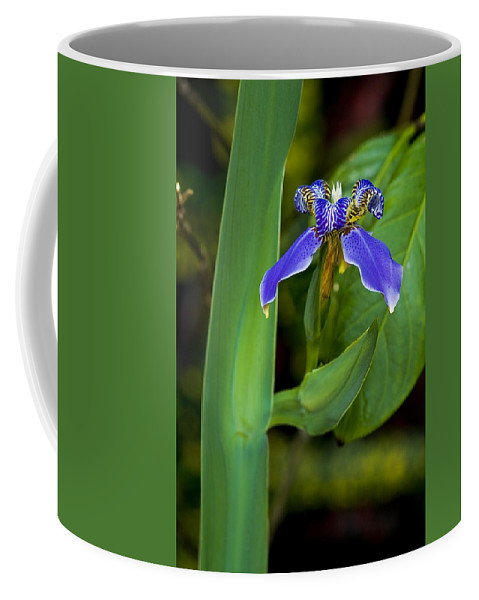 Flower Coffee Mug featuring the photograph Iris On Green by Ches Black