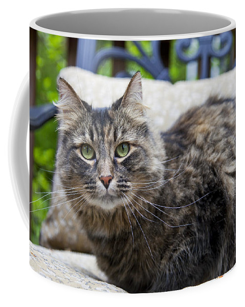 Cat Coffee Mug featuring the photograph Isabella by Amy Jackson