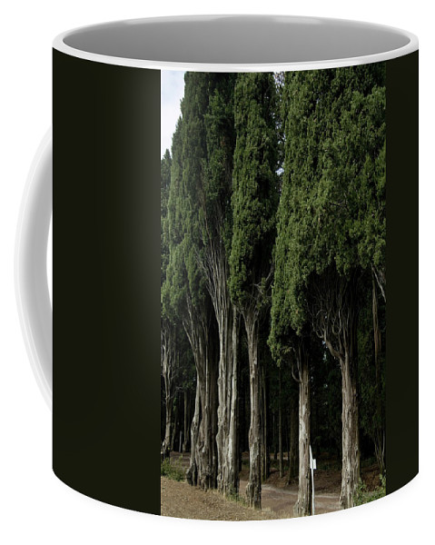 Photography Coffee Mug featuring the photograph Italian Cypress Trees Line A Road by Todd Gipstein
