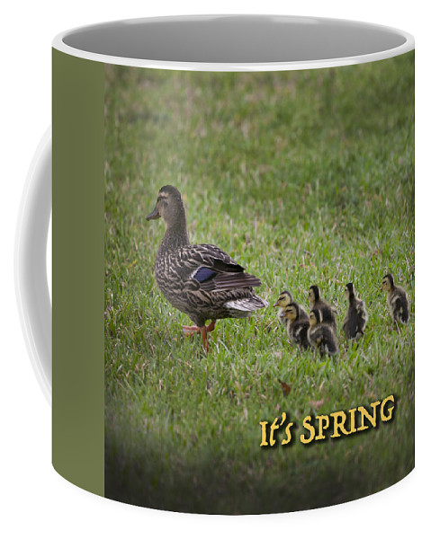 Ducklings Coffee Mug featuring the photograph Its Spring by Mykel Davis