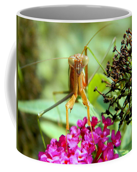 Praying Mantis Coffee Mug featuring the photograph I've Got My Eye On You by Arlane Crump