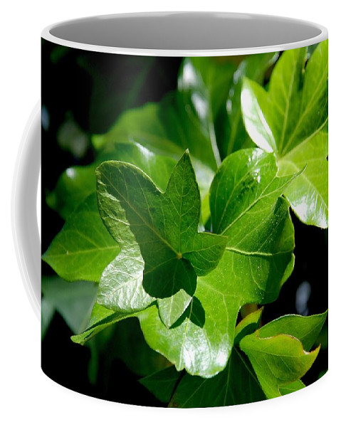 Photography Coffee Mug featuring the photograph Ivy In Sunlight by Susanne Van Hulst