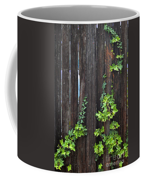 Clay Coffee Mug featuring the photograph Ivy On Fence by Clayton Bruster