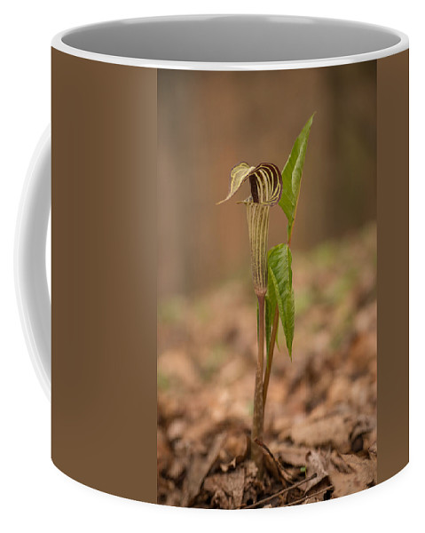 Spring Coffee Mug featuring the photograph Jack In The Pulpit by Joye Ardyn Durham
