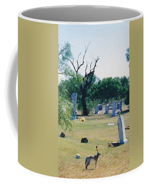 Rabbit Cementery Tombstones Coffee Mug featuring the photograph Jack Rabbit In Cementery by Cindy New
