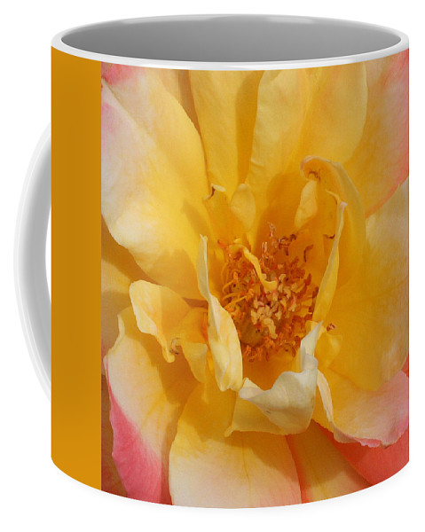 Rose Coffee Mug featuring the photograph Jacob's Bands Of Color by Marna Edwards Flavell