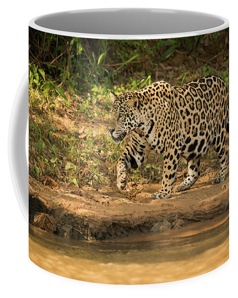 Brazil Coffee Mug featuring the photograph Jaguar Walking Beside River In Dappled Sunlight by Ndp