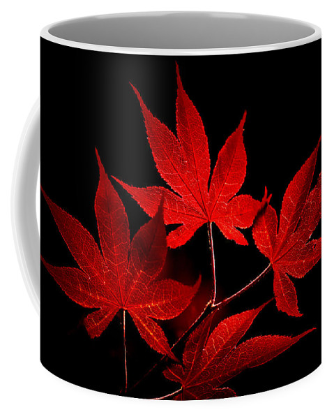 Photograph Coffee Mug featuring the photograph Japanese Maple by Rich Leighton
