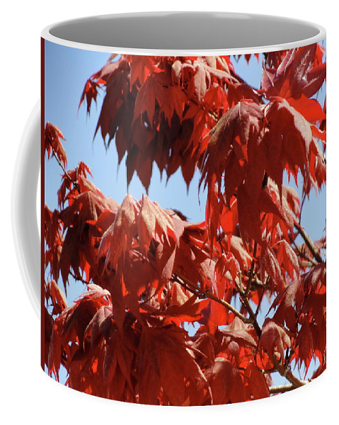 Japanese Maple Coffee Mug featuring the photograph Japanese Maple by Shannon Grissom