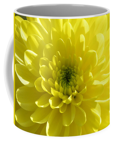 Nature Coffee Mug featuring the photograph Yellow Luminosity by Shannon Turek