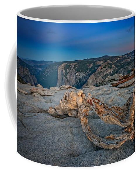 Jeffrey Pine Coffee Mug featuring the photograph Jeffrey Pine On Sentinel Dome by Rick Berk