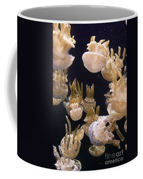 Jellyfish Coffee Mug featuring the photograph Jelly Parade by Jim And Emily Bush
