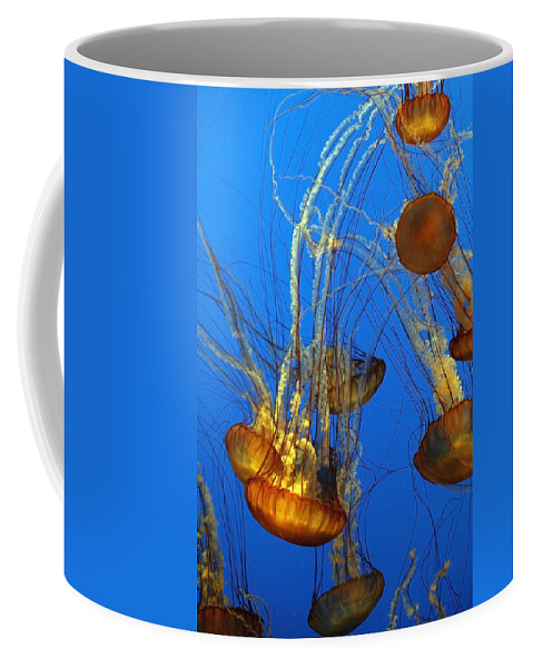 Animal Coffee Mug featuring the photograph Jellyfish Family by Marilyn Hunt