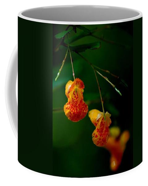 Digital Photograph Coffee Mug featuring the photograph Jewel 2 by David Lane