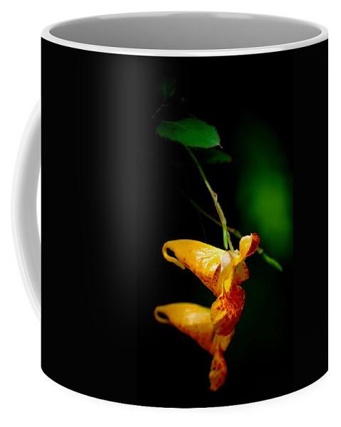 Digital Photograph Coffee Mug featuring the photograph Jewel by David Lane