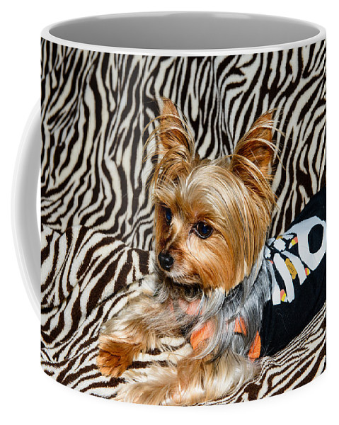 Yorkie Coffee Mug featuring the photograph Jibby by Michael Scott