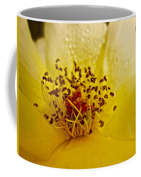 Photograph Of Rose Coffee Mug featuring the photograph Jitterbug by Gwyn Newcombe