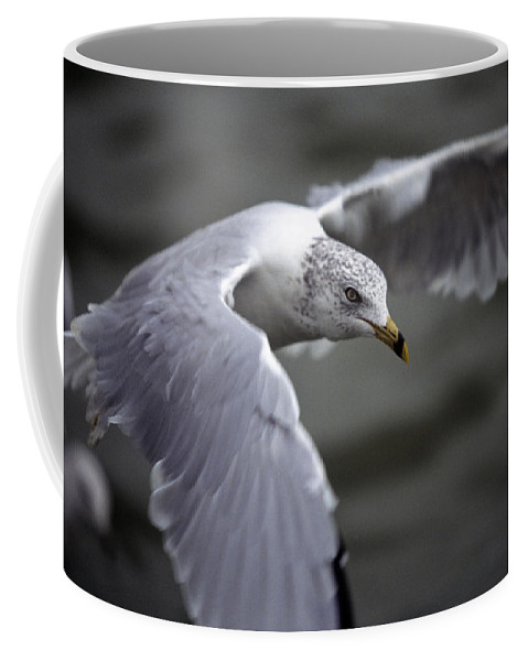 Bird Coffee Mug featuring the photograph Johnathan Livingston Seagull by John Harmon