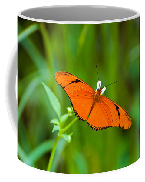 Butterfly Coffee Mug featuring the photograph Julia Butterfly by Rich Leighton
