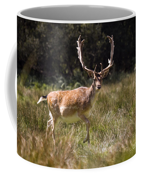 Fallow Deer Coffee Mug featuring the photograph Jump Jump by Angel Ciesniarska