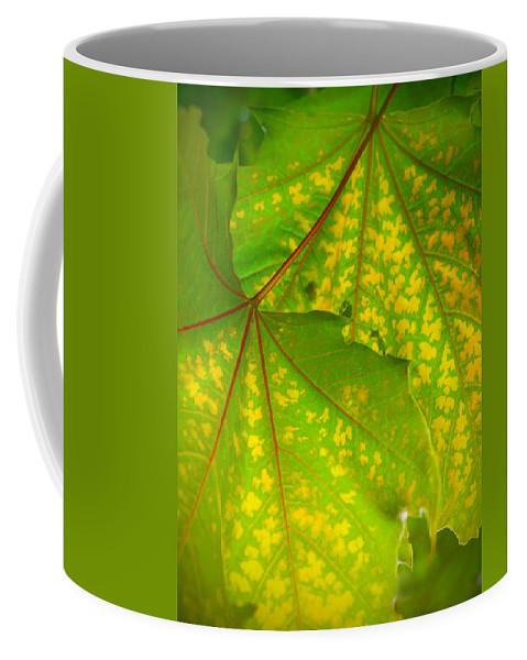 Leaves Coffee Mug featuring the photograph June 11 2010 by Tara Turner