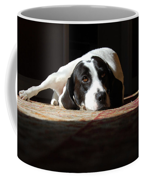 Dogs.animal Coffee Mug featuring the photograph Junebug by Robert Meanor