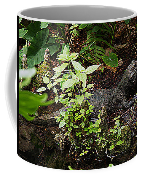 Gator Coffee Mug featuring the photograph Just A Little Guy by Bob Johnson
