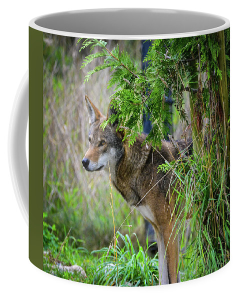 Red Wolf Coffee Mug featuring the photograph Just A Peek Around The Corner by James Farrell