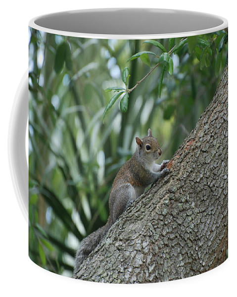 Squirrels Coffee Mug featuring the photograph Just Chilling Out by Rob Hans