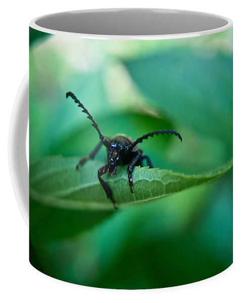 Beetle Coffee Mug featuring the photograph Just Looking For Another Beetle by Douglas Barnett