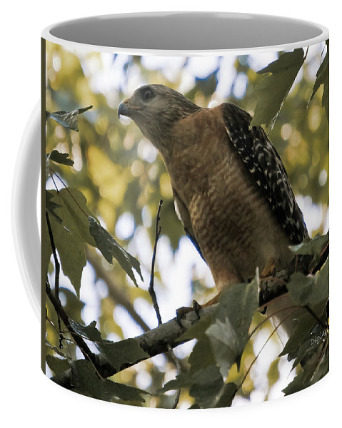 Red Shouldered Hawk Coffee Mug featuring the photograph Just Spotted Dinner by DigiArt Diaries by Vicky B Fuller
