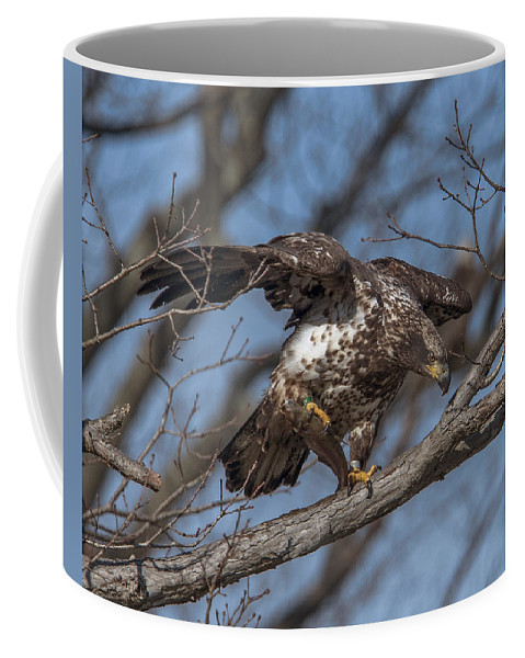 Nature Coffee Mug featuring the photograph Juvenile Bald Eagle With A Fish Drb0218 by Gerry Gantt