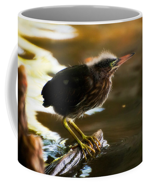 Animal Coffee Mug featuring the photograph Juvenile Green Heron by Rich Leighton